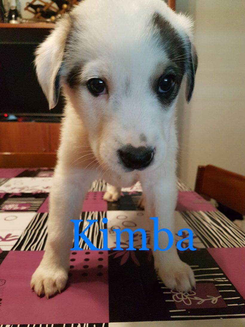 Kimba in cerca di casa    ADOTTATA
